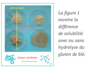 poudre de lait composant gluten de blé